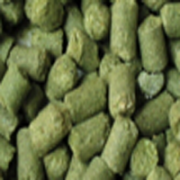 US Brewer's Gold Pellet Hops